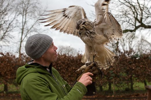 Billy with his Bengal Eagle Owl